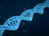 Geheimnis der Gesundheit- Die Regulation der Genaktivität